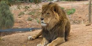 Qual animal você se parece quando esta bravo(a)?
