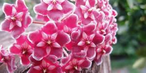 Fotocollage mit rosa Blumen und 18 Freunde!