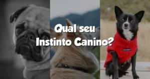 Qual seu Instinto Canino?