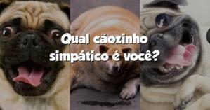 Qual cãozinho simpático é você?