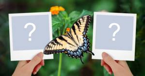 Linda moldura para duas fotos com borboleta - Adicione suas fotos!