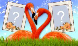 Linda Moldura de Flamingo para duas Fotos. Quais Fotos você escolheria?