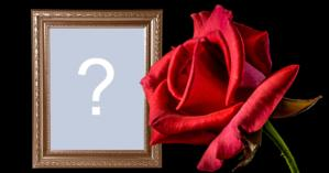 Beautiful frame with red rose, wooden frame and black background. Add your photo