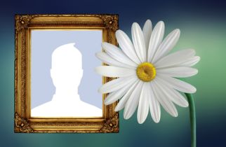 Beautiful photo montage with daisy and golden frame