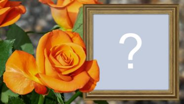 Beautiful photo montage with orange rose and wooden frame