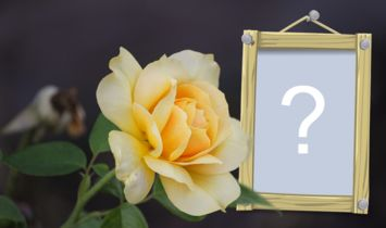 Rama foto frumoasă cu trandafir galben! Adăugați fotografia.