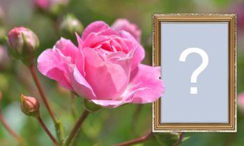 Ramă foto cu trandafir și graniță cu accente de aur
