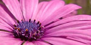 Montagem bem vinda Primavera com 3 das suas fotos mais curtidas.