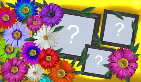 Beautiful frame of colorful flowers with 3 photos. Make yours!