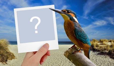 Cadru frumos cu pasăre mică. Adăugați o fotografie pentru a vă face a dvs!