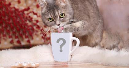 Montagem de foto na caneca e um lindo gatinho!
