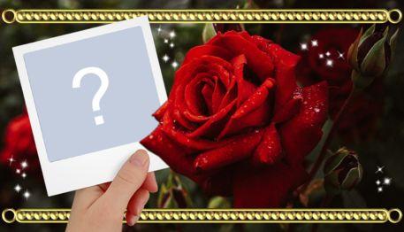 Linda montagem de foto polaroid ao lado de uma rosa vermelha. Adicione a sua foto!