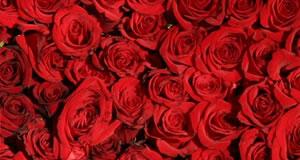 Mosaico de 6 fotos com fundo de rosas vermelhas