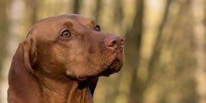Como seria o cachorro perfeito para você?