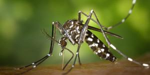 Mosaico Todos contra a Dengue! Faça o seu e apoie esta campanha!