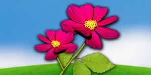 Mosaico de Flores com 31 amigos do Facebook. Crie o seu!