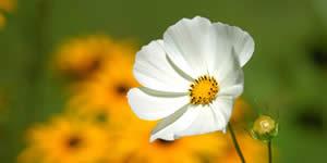 Foto-Collage mit schönen Blumen und 16 Freunde. Erstellen Sie Ihre!